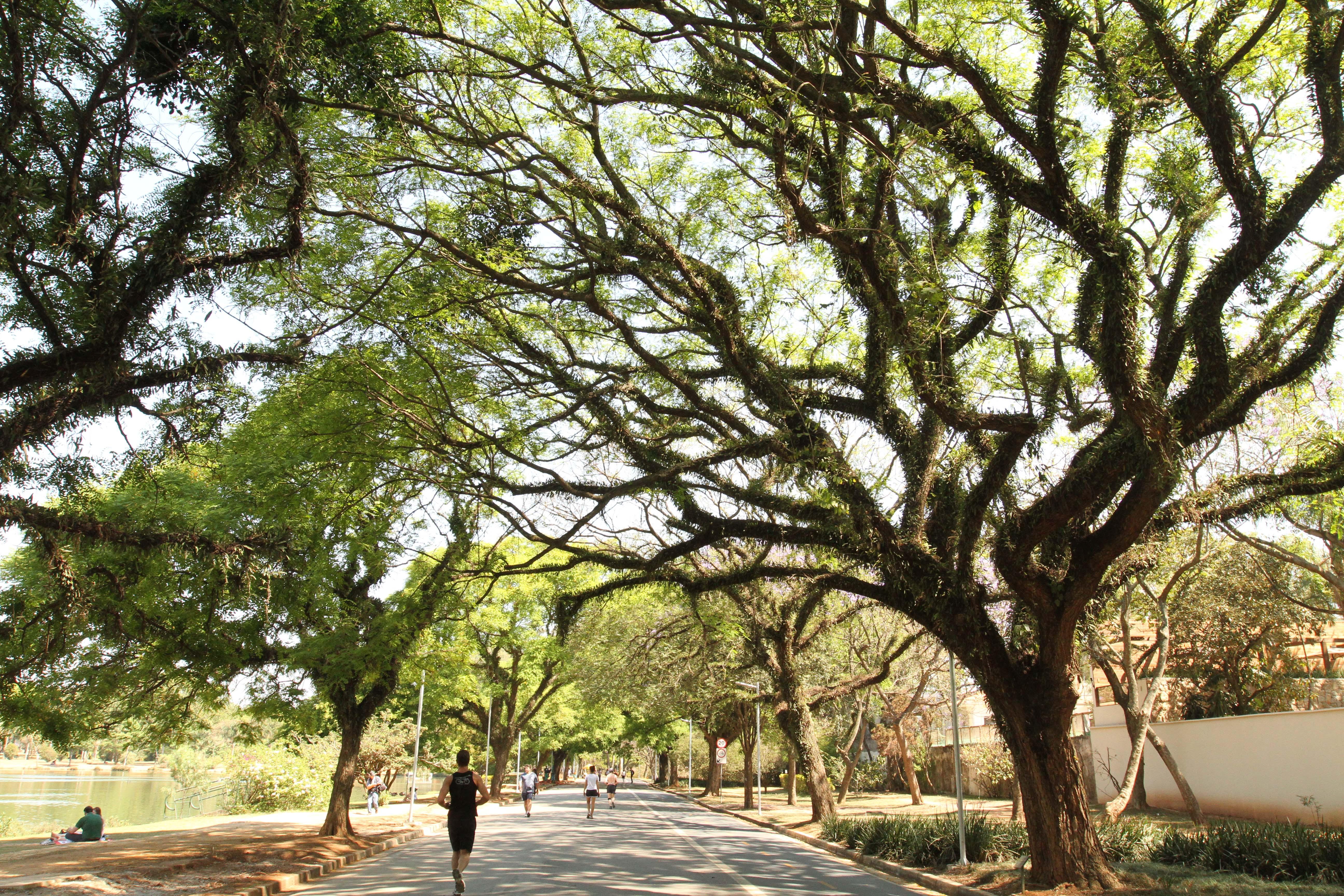 IBIRAPUERA – SÃO PAULO (SP) – 01.06.2011 – VISTA AÉREA DO PARQUE IBIRAPUERA - AV PEDRO ÁLVARES CABRAL, S/N (PORTÕES 2, 3 E 10). FOTO: CAIO PIMENTA/SPTURIS
